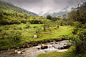 river and cloudy mountains, Cocora Valley, Salento, UNESCO World Heritage Coffee Triangle, Departmento Quindio, Colombia, Southamerica
