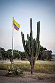cactus and Colombian flag, Tatacoa desert (Desierto de la Tatacoa), township Villavieja nearby Neiva, Departmento Huila, Colombia, Southamerica