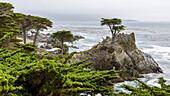Lone Cypress, Pebble Beach, Big Sur, Kalifornien, USA