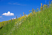 Blooming sloping meadow with lush green grass, behind a barbed wire fence and Blue Sky With White Clouds
