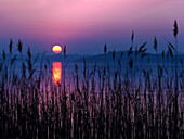 Colorful Sunset on Lake Chiemsee, in the foreground reed stalks