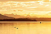 Ducks and fisherman in boat in the last evening light on the Chiemsee lake, shore and mountains as silhouettes in the background