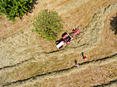Aerial view of the hay with an old tractor and nostalgic rotor rakes in a orchards with rake, helpers are waiting for your use