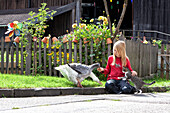 Blond Girl sits in front of cottage gardens and plays with geese and a cat