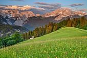 Blumenwiese mit Wettersteingrat, Alpspitze und Zugspitze, Wetterstein, Werdenfelser Land, Oberbayern, Bayern, Deutschland