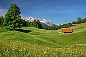 Alpine meadow with Alpspitze, Zugspitze and Waxensteine in background, Wetterstein range, Werdenfels, Upper Bavaria, Bavaria, Germany