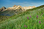 Alpine meadow with Birnhorn in Leogang Mountains in background, Berchtesgaden Alps, Salzburg, Austria