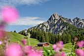 Alpine meadow with alpine hut and rock summits in background, Reiteralm, Berchtesgaden Alps, Salzburg, Austria