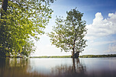 Sommerliche Seenlandschaft aus der Froschperspektive in Mecklenburg-Vorpommern