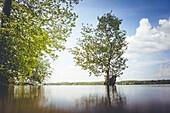 Summery lake landscape from the frog perspective in Mecklenburg-Vorpommern