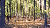 Mountain bikers ride through light-flooded mixed forest in Mecklenburg-Vorpommern