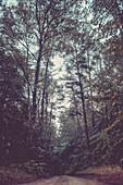Wanderweg im Mischwald der Feldberger Seenlandschaft