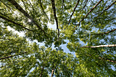 Blätterdach über einem Feuchtmoor auf der Halbinsel Zingst
