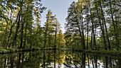 Flusslandschaft im Frühsommer bei Sonnenschein im Spreewald