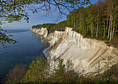 Chalk cliffs in the Jasmund National Park Rugen Island Packages sugar shores, Germany Mecklenburg-Western Pomerania
