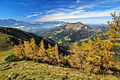Herbstlich verfärbte Lärchen mit Schmittenstein im Hintergrund, von Hoher First, Salzkammergut, Salzburg, Österreich