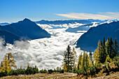 Herbstlich verfärbte Lärchen mit Nebelstimmung über dem Achensee, Rofan und Karwendel im Hintergrund, Seebergspitze, Karwendel, Tirol, Österreich