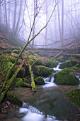 Torrent, Spessart Nature Park, Lower Franconia, Bavaria, Germany
