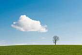 tree, single, Cumulus cloud, Höchenschwand, black forest, Baden-Württemberg, Germany