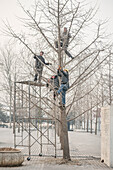 chinese workers cut tree, heavy air pollution, Olympic Green, Beijing, China, Asia