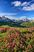 Blühende Alpenrosen vor Tofana und Monte Cristallo, Dolomiten, UNESCO Welterbe Dolomiten, Venetien, Venezien, Italien