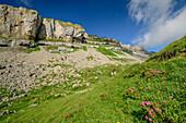 Blumenwiese unter Hoher Ifen, Hoher Ifen, Allgäuer Alpen, Walsertal, Vorarlberg, Österreich