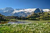 Lake with cotton grass in front of glacier mountains, view towards Ecrins, lake Lac Lérié, Plateau d' Emparis, National Park Ecrins, Dauphine, Dauphiné, Hautes Alpes, France