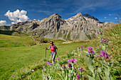Woman hiking through meadow with flowers with Grand Galibier in background, at lake Lac Cerces, Dauphine, Dauphiné, Hautes Alpes, France