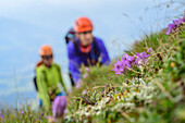 Two women on a via ferrata blurry in the Background With Flower Meadow in focus in the foreground, a donkey stone, the Dachstein, Styria, Austria
