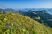 Flower meadow with views of the Hoher Göll Untersberg mountain and Ross Field, Schuster dough, High Goll, Berchtesgaden Alps, Upper Bavaria, Bavaria, Germany