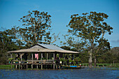 A house on stilts with a wrap-around deck stands in front of two large trees in an Amazon River tributary, Ballalo, Amazonas, Brazil, South America
