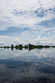 Still waters on a side-arm of the Rio Negro reflect trees and the cloudy sky , near Manaus, Amazonas, Brazil, South America