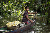 A young woman paddles a canoe with a basket of freshly peeled manioc on a side-arm of the Amazon River, Uara, Amazonas, Brazil, South America