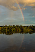 A rainbow forms over the bank of the Amazon River, Jutai, Amazonas, Brazil, South America