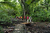 Tourists on an excursion cross a wooden bridge to enter a lush tropical forest, Pohnpei Island, Pohnpei, Federated States of Micronesia, South Pacific