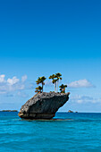A tiny craggy island crowned by several palm trees stands in turquoise water, with several small islands in the background, Fulaga Island, Lau Group, Fiji, South Pacific