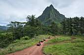 An excursion group of tourists on 4WD quad bikes on a rust red dirt road through lush vegetation approaches a scenic viewpoint, Moorea, Society Islands, French Polynesia, South Pacific