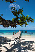 Blick von unter einem großen Baum auf einen mächtigen Ast, seinen Schatten auf dem Sand sowie einem Pier und ein kleines Ruderboot im türkisfarbenen Wasser, Huahine, Gesellschaftsinseln, Französisch-Polynesien, Südpazifik