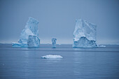 Several Adélie penguins (Pygoscelis adeliae) rest on a small piece of ice and are dwarfed by the three towers of a once much-larger iceberg in the background, Wilhelmina Bay, Antarctic Peninsula, Antarctica