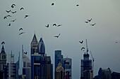 Vögel, Dämmerung, Sheikh Zayed Road, Hochhäuser, Dubai, VAE, Vereinigte Arabische Emirate