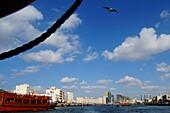Möwe, Schiff, Abra, Dubai Creek, Dubai, VAE, Vereinigte Arabische Emirate