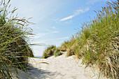 Sanddüne, Strandhafer, Fußweg, Baltrum, Ostfriesiche Inseln, Nordsee, Landkreis Aurich,  Niedersachsen, Deutschland, Europa