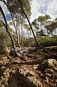 nature reserve, Mondrago, Santanyi, Majorca, Spain, Europe