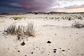 sand dunes, nature reserve, El Jable, Corralejo, La Oliva, Fuerteventura, Spain, Europe