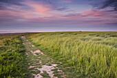 salt marsh, footpath, wadden sea, sky, clouds, Dangast, Varel, Friesland - district, Lower Saxony, Germany, Europe
