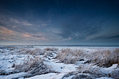 wadden sea, winter, frost, reed, dusk, Dangast, Varel, Friesland - district, Lower Saxony, Germany, Europe