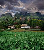 Tobacco farmers with Vinales landscape, Pinar del Rio, Pinar del Rio, Cuba, Carribean, North America