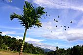 Bei Embekke Devale im Bergland bei Kandy, Sri Lanka