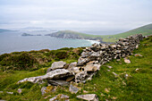 An old stone wall guides the way over the hill to the famous small peninsula Slea Head with Slea Head Beach on a grey and chilly spring day seen from while walking the Dingle Way, Slea Head, Dingle Peninsula, County Kerry, Ireland, Europe