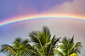 Palm tree with rainbow, San Juan, Puerto Rico, Caribbean, USA